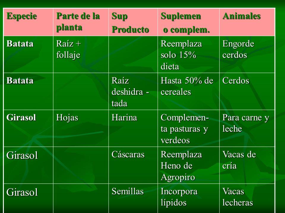 Especie Parte de la planta SupProductoSuplemen o complem. o complem.Animales Batata Raíz + follaje Reemplaza solo 15% dieta Engorde cerdos Batata Raíz