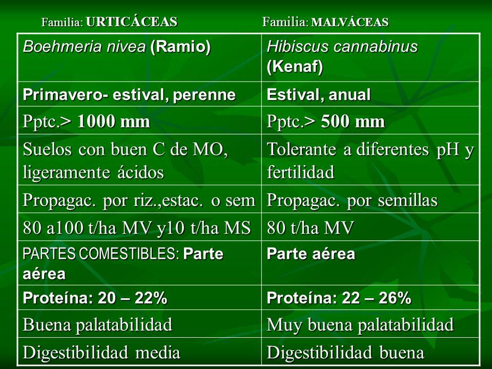 Boehmeria nivea (Ramio) Hibiscus cannabinus (Kenaf) Primavero- estival, perenne Estival, anual Pptc.> 1000 mm Pptc.> 500 mm Suelos con buen C de MO, l