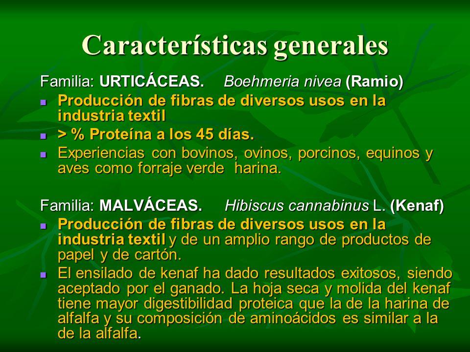Características generales Familia: URTICÁCEAS. Boehmeria nivea (Ramio) Producción de fibras de diversos usos en la industria textil Producción de fibr