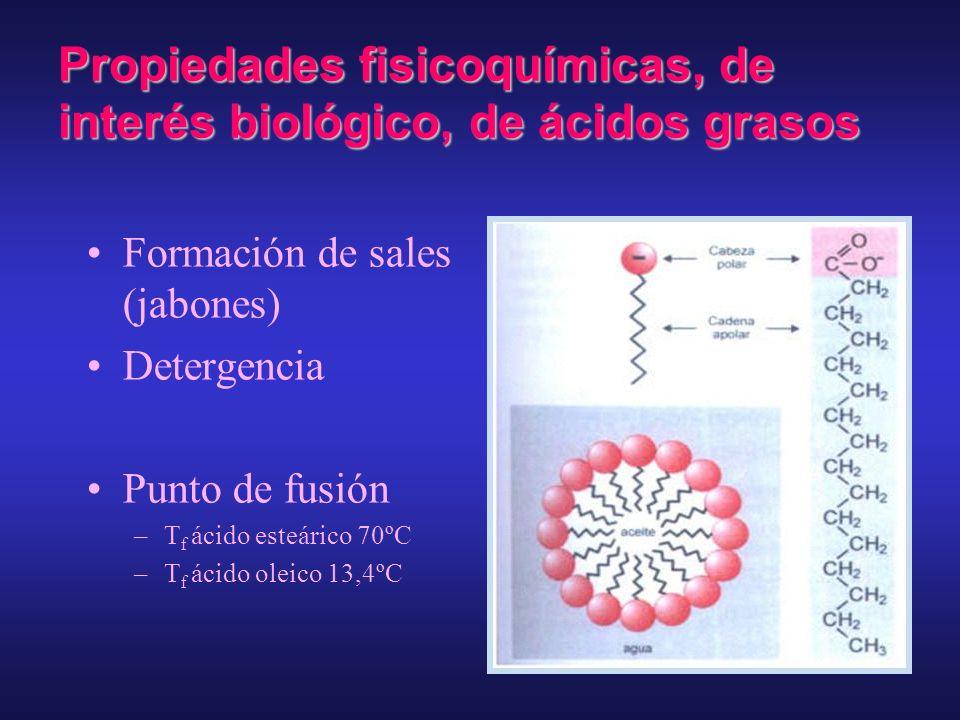 Aspectos estructurales de los ácidos grasosC; O; H Modelos moleculares espaciales compactos. (a) Ácido graso saturado (esteárico) (b) Ácido graso mono