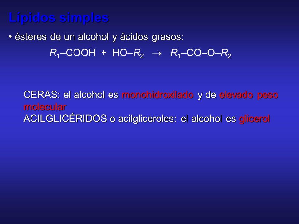 Propiedades fisicoquímicas, de interés biológico, de ácidos grasos Formación de sales (jabones) Detergencia Punto de fusión –T f ácido esteárico 70ºC