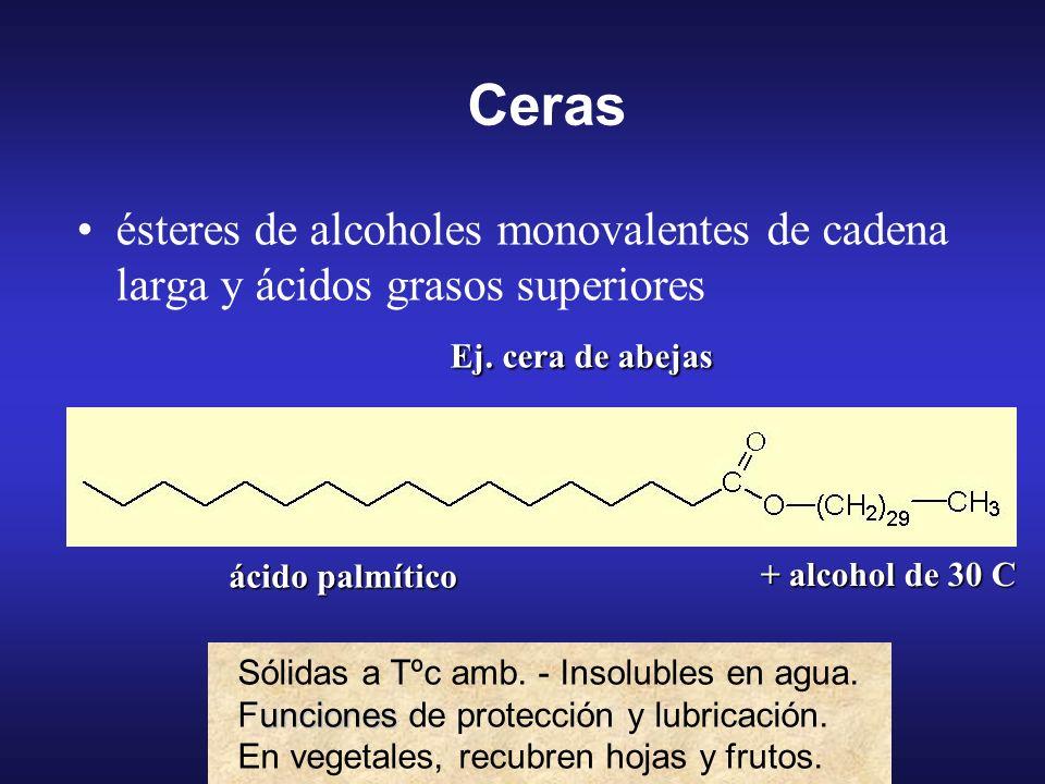 R 1 –COOH + HO–R 2 R 1 –CO–O–R 2 Lípidos simples ésteres de un alcohol y ácidos grasos:ésteres de un alcohol y ácidos grasos: CERAS: el alcohol es mon