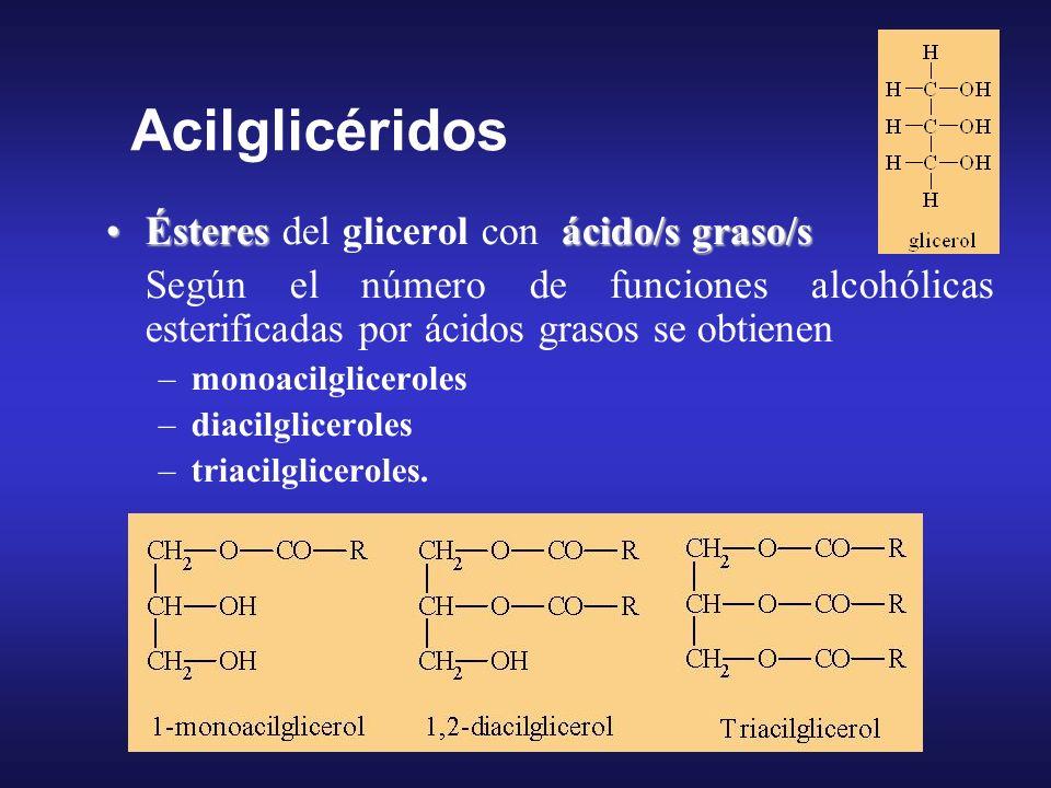ésteres de un alcohol de cadena hidrocarbonada larga y un ácido grasoésteres de un alcohol de cadena hidrocarbonada larga y un ácido graso son sólidos