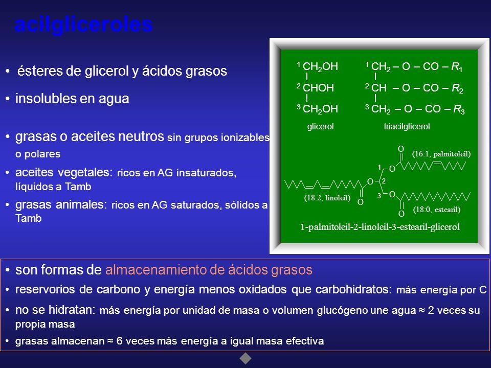 Acilglicéridos Ésteresácido/s graso/sÉsteres del glicerol con ácido/s graso/s Según el número de funciones alcohólicas esterificadas por ácidos grasos