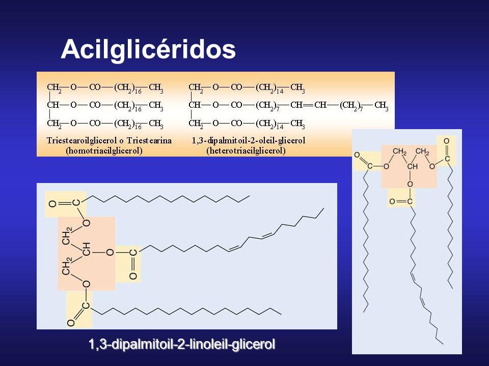 acilgliceroles ésteres de glicerol y ácidos grasos 1 CH 2 OH 2 CHOH 3 CH 2 OH glicerol 1 CH 2 – O – CO – R 1 2 CH – O – CO – R 2 3 CH 2 – O – CO – R 3