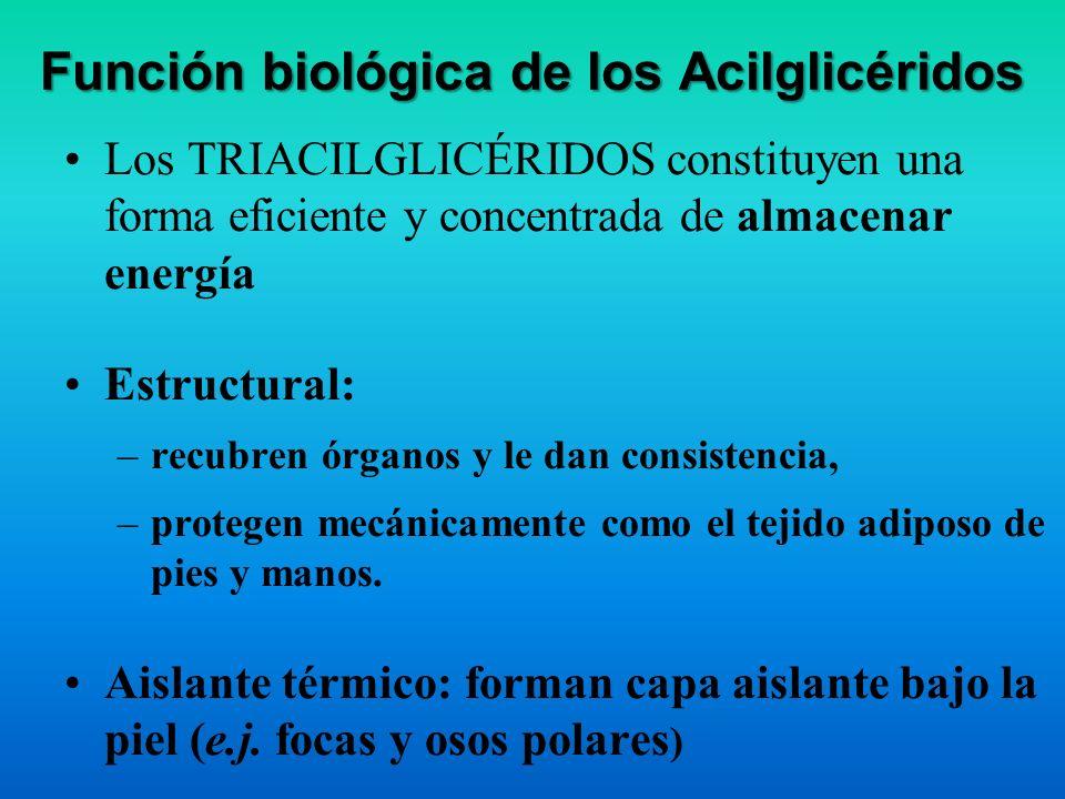 Propiedades fisicoquímicas de Acilglicéridos Solubilidad: insolubles en agua, solubles en solventes orgánicos Pto. de fusión: –los TG ricos en AG satu