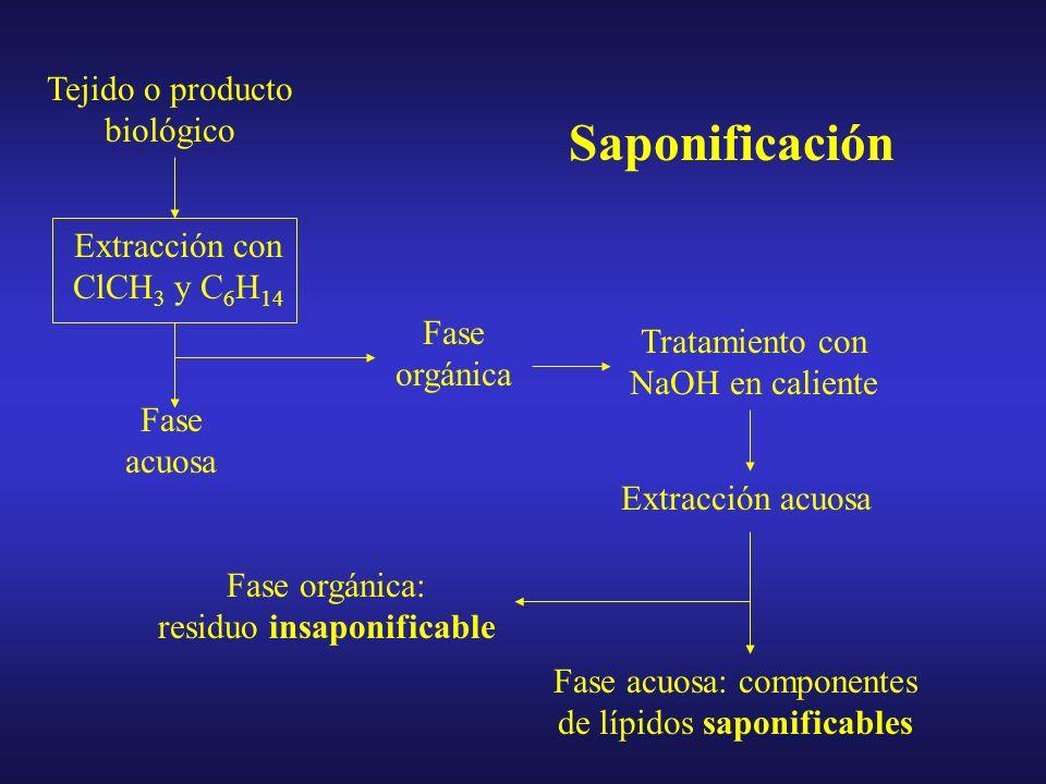 Función biológica de los Acilglicéridos Los TRIACILGLICÉRIDOS constituyen una forma eficiente y concentrada de almacenar energía Estructural: –recubre