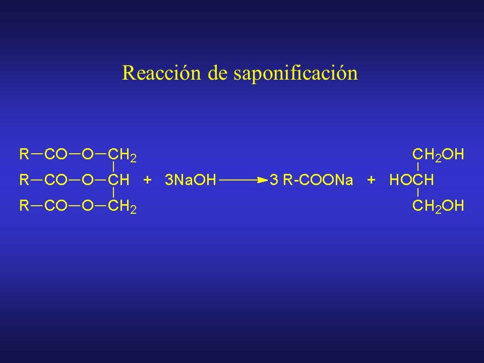 Saponificación Tratamiento con NaOH en caliente Tejido o producto biológico Extracción con ClCH 3 y C 6 H 14 Fase acuosa Fase orgánica Extracción acuo
