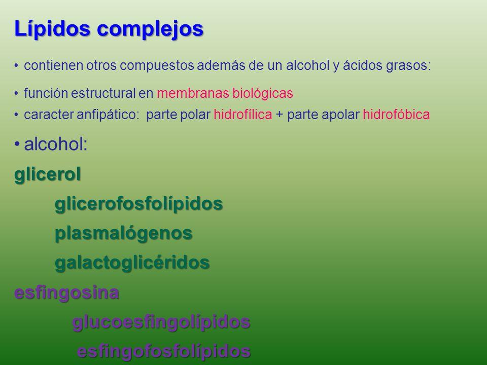 Lípidos complejos formados por un alcohol, AG y un grupo sustituyente GlicerolípidosGlicerolípidos –Glicolípidos –Fosfolípidos EsfingolípidosEsfingolí