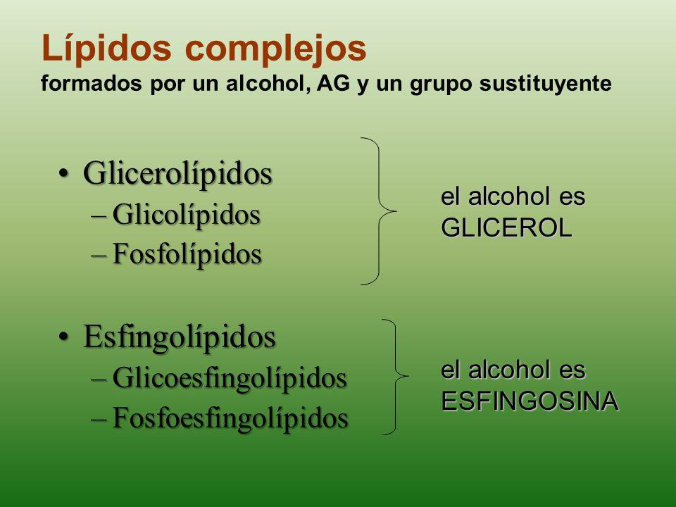 Fosfolípidos Glicerofosfolípidos,PlasmalógenosEsfingofosfolípidos