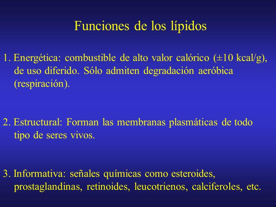 Lípidos del griego lipos, grasa Sustancias muy diversas (estructura y función) Solubles en disolventes orgánicos apolares (ej. cloroformo), pero poco