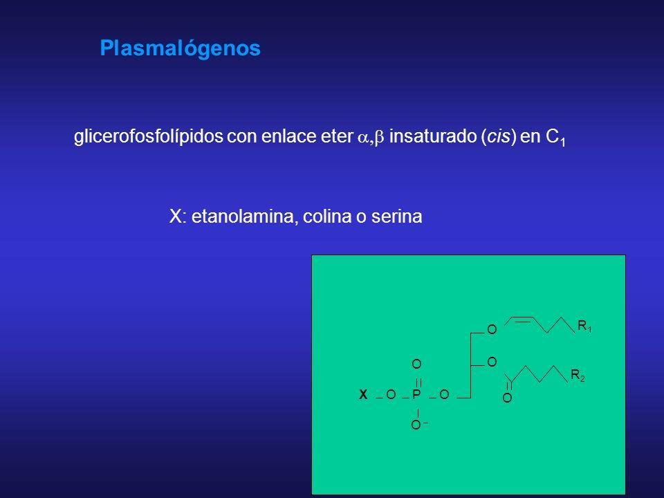 Enzima Productos de la hidróilisis de la Fosfatidilcolina FL asa A 2 Lisofosfolípido + AGL FL asa CDAG y colina fosforilada FL asa DÁcido fosfatídico