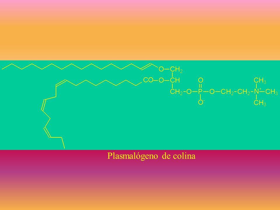 Lípidos complejos formados por un alcohol, AG y un grupo sustituyente Glicerolípidos –Gliceroglicolípidos –Glicerofosfolípidos Esfingolípidos –Glicoes