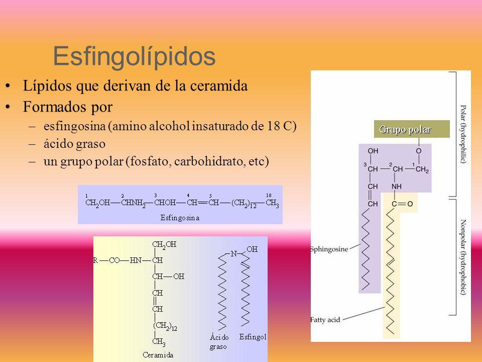Plasmalógeno de colina