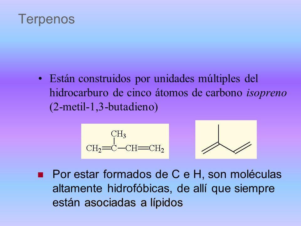 Lípidos derivados no clasificables como simples o compuestos grupo de sustancias muy heterogéneo rutas biosintéticas muy diversas y complejas, a parti