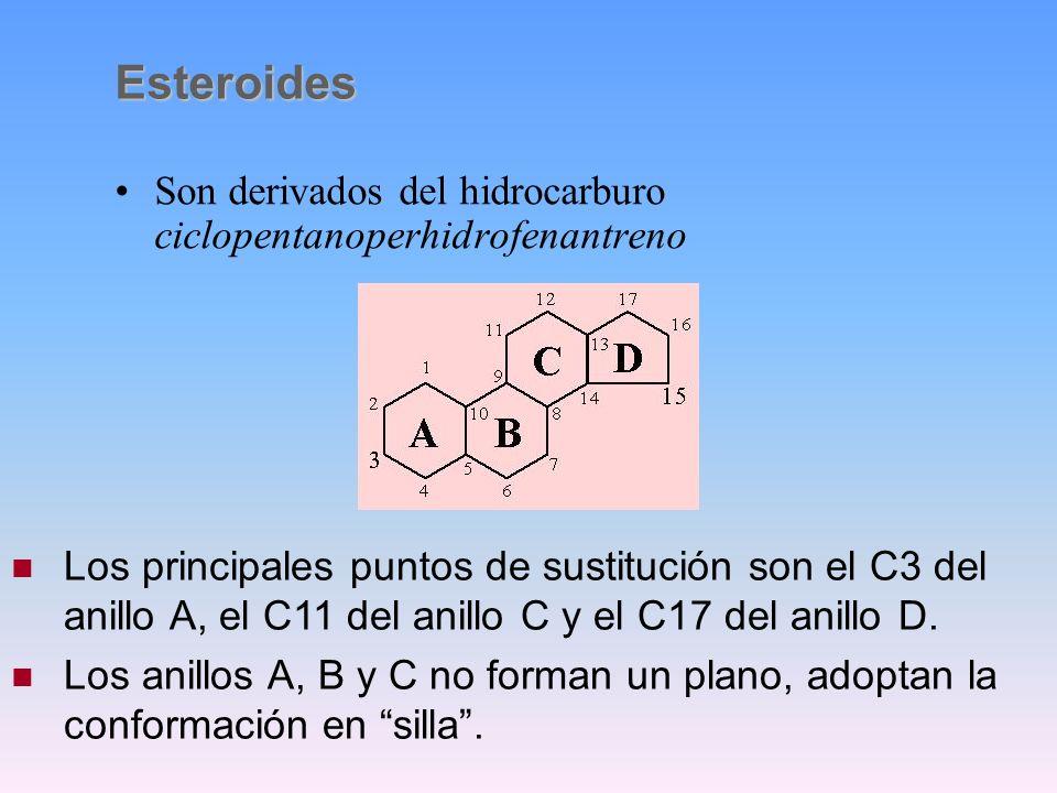 transferencia de grupos de azúcarSu función es la transferencia de grupos de azúcar desde el citoplasma a la superficie exterior celular durante la sí