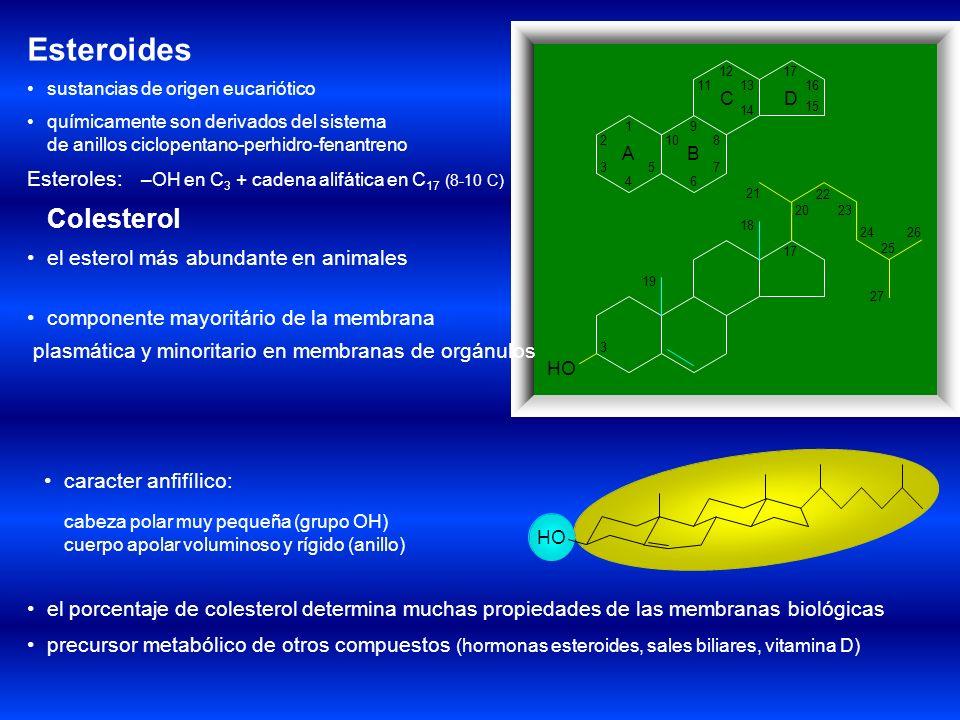Esteroides Son derivados del hidrocarburo ciclopentanoperhidrofenantreno Los principales puntos de sustitución son el C3 del anillo A, el C11 del anil