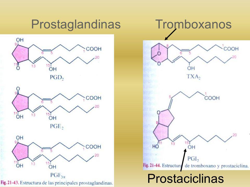 Eicosanoides Hidroxiacidos derivados de ácidos grasos Poliinsaturados de 20 C (ej: ácido araquidónico) Intervienen en el proceso inflamatorio Comprend