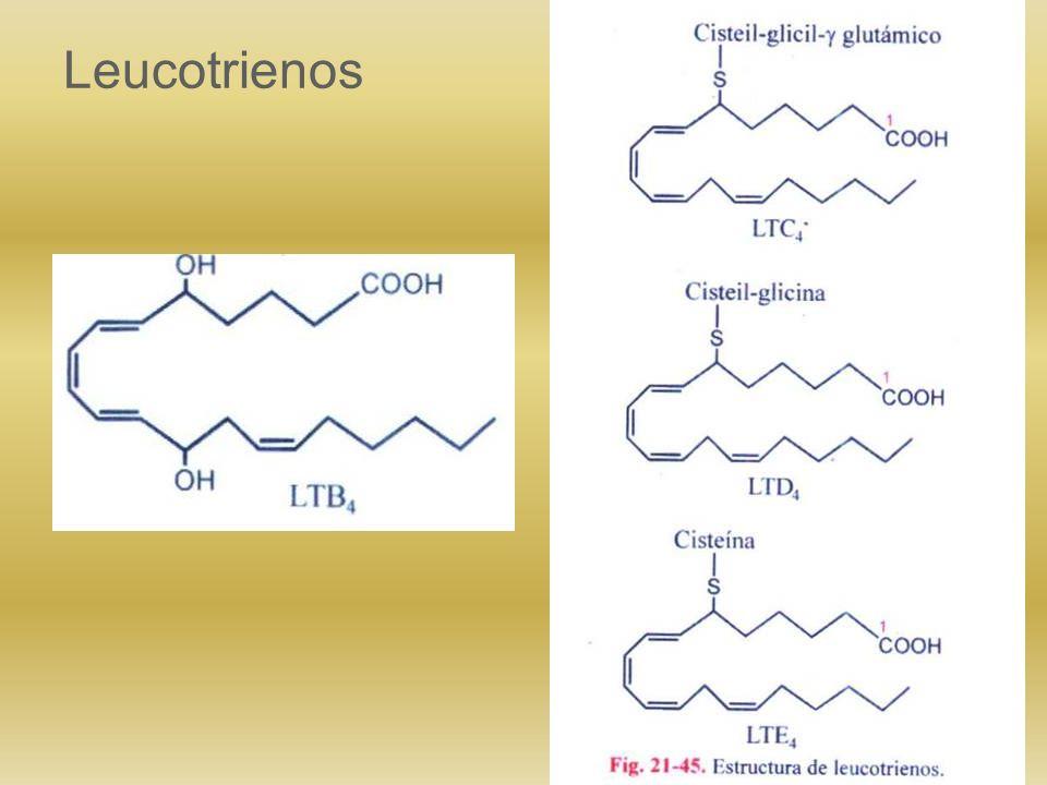 Prostaglandinas Tromboxanos Prostaciclinas