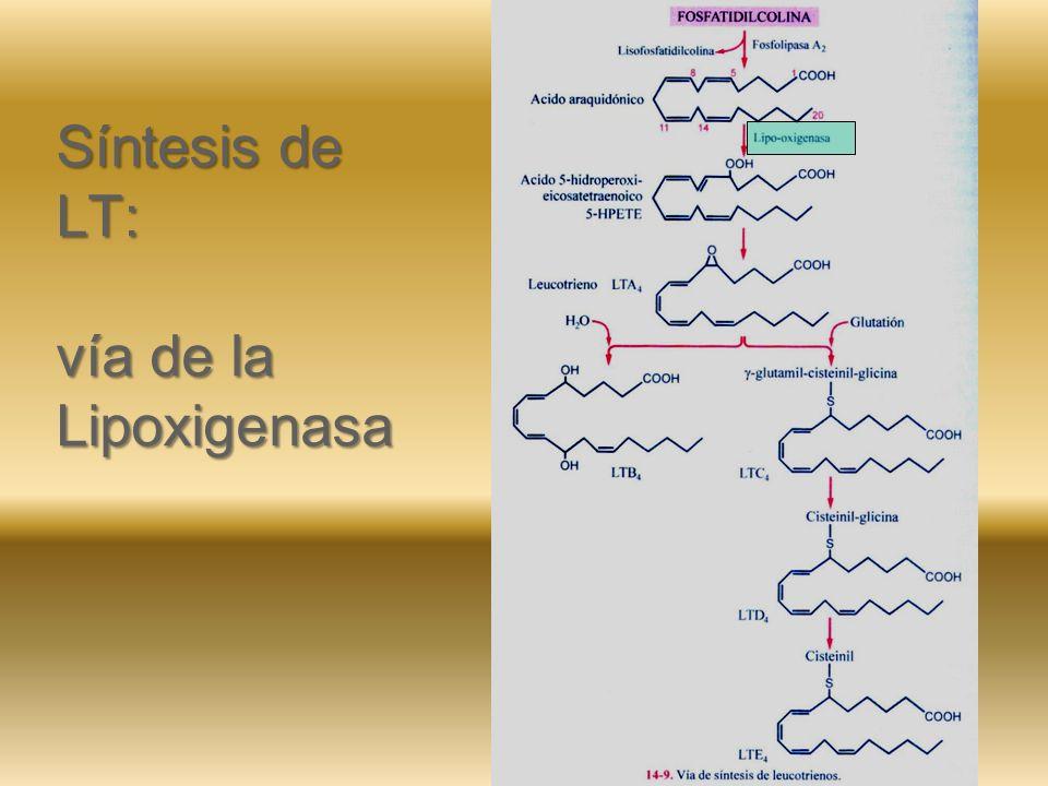 Síntesis de PG – PGI – Tx: vía de la Ciclo-oxigenasa