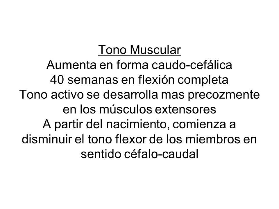 Tono Muscular Aumenta en forma caudo-cefálica 40 semanas en flexión completa Tono activo se desarrolla mas precozmente en los músculos extensores A pa