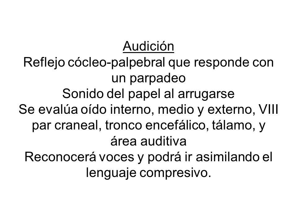 Audición Reflejo cócleo-palpebral que responde con un parpadeo Sonido del papel al arrugarse Se evalúa oído interno, medio y externo, VIII par craneal