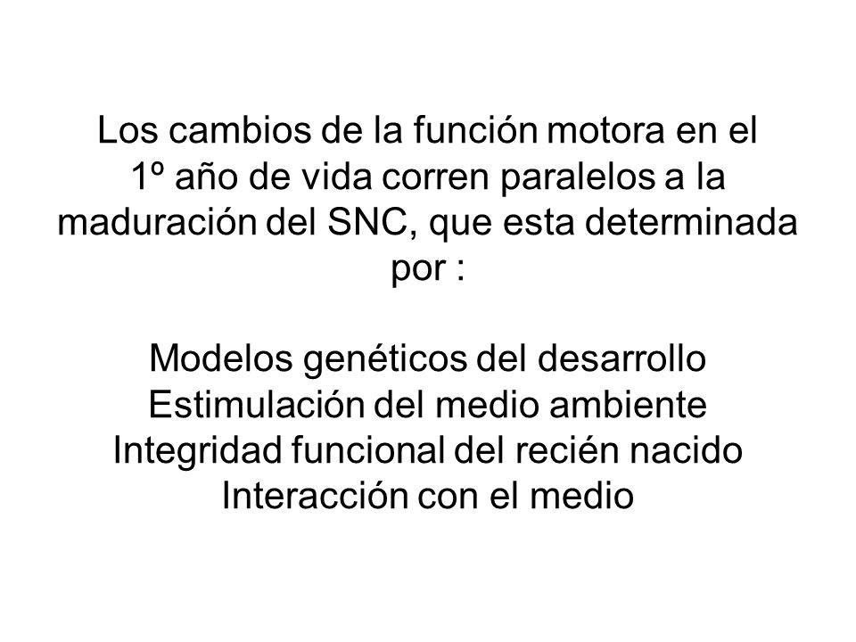 Los cambios de la función motora en el 1º año de vida corren paralelos a la maduración del SNC, que esta determinada por : Modelos genéticos del desar