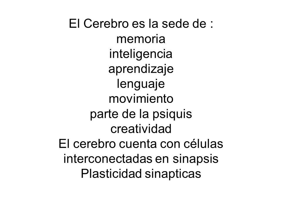 El Cerebro es la sede de : memoria inteligencia aprendizaje lenguaje movimiento parte de la psiquis creatividad El cerebro cuenta con células intercon