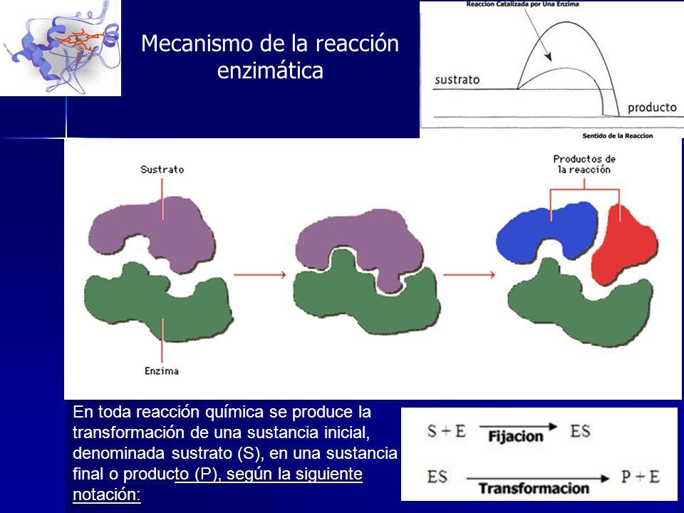 En toda reacci ó n qu í mica se produce la transformaci ó n de una sustancia inicial, denominada sustrato (S), en una sustancia final o producto (P),