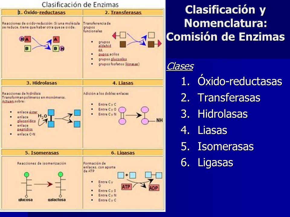 Clases 1.Óxido-reductasas 2.Transferasas 3.Hidrolasas 4.Liasas 5.Isomerasas 6.Ligasas Clasificación y Nomenclatura: Comisión de Enzimas