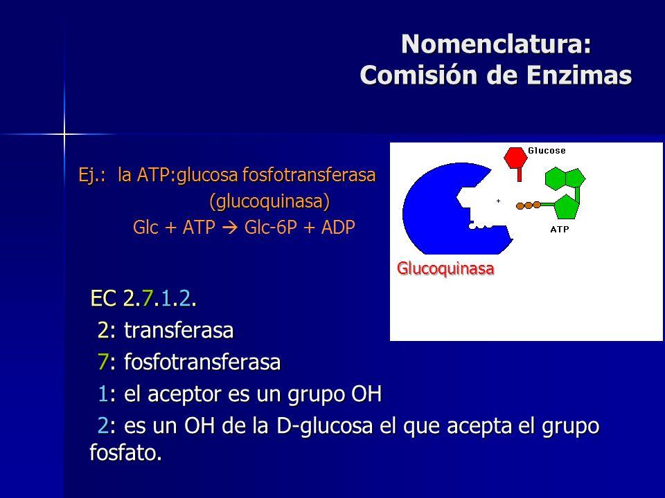 EC 2.7.1.2. 2: transferasa 2: transferasa 7: fosfotransferasa 7: fosfotransferasa 1: el aceptor es un grupo OH 1: el aceptor es un grupo OH 2: es un O