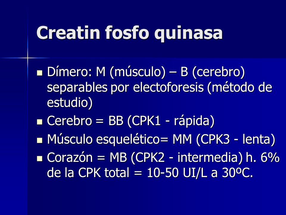 Creatin fosfo quinasa Dímero: M (músculo) – B (cerebro) separables por electoforesis (método de estudio) Dímero: M (músculo) – B (cerebro) separables