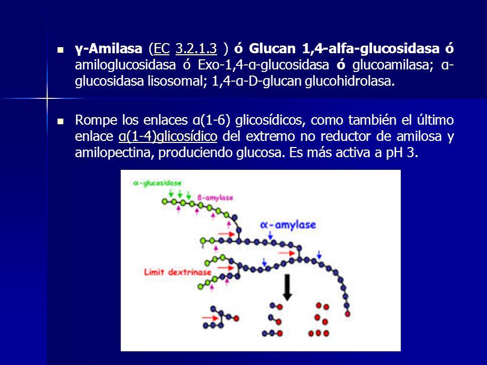 γ-Amilasa (EC 3.2.1.3 ) ó Glucan 1,4-alfa-glucosidasa ó amiloglucosidasa ó Exo-1,4-α-glucosidasa ó glucoamilasa; α- glucosidasa lisosomal; 1,4-α-D-glu