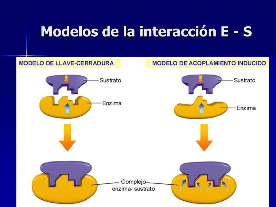 Modelos de la interacción E - S