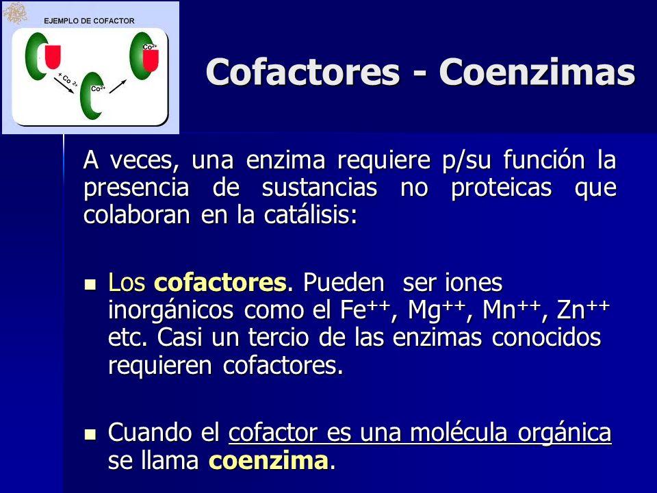 Cofactores - Coenzimas A veces, una enzima requiere p/su función la presencia de sustancias no proteicas que colaboran en la catálisis: Los cofactores