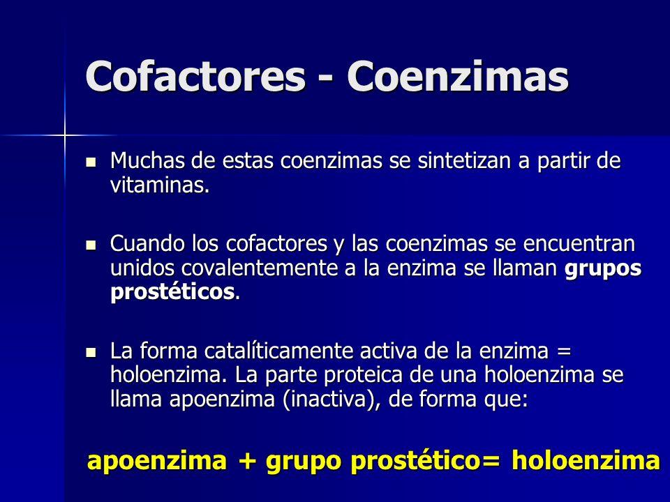 Cofactores - Coenzimas Muchas de estas coenzimas se sintetizan a partir de vitaminas. Muchas de estas coenzimas se sintetizan a partir de vitaminas. C