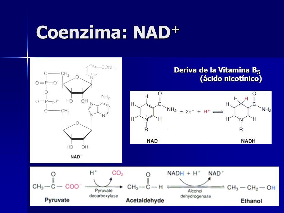 Coenzima: NAD + Deriva de la Vitamina B 5 (ácido nicotínico)