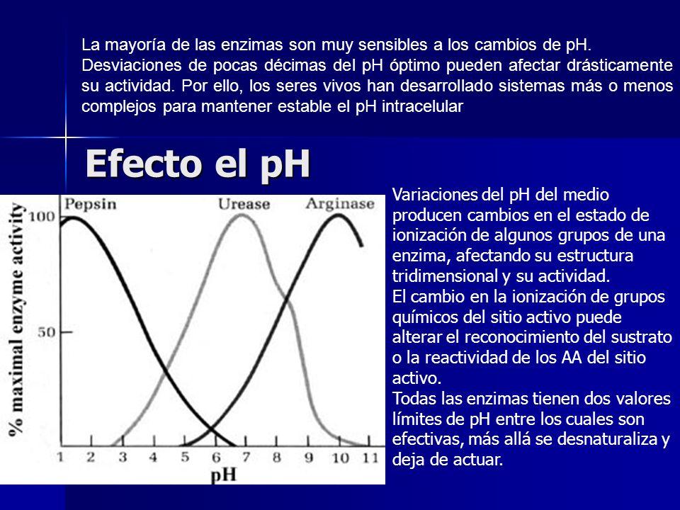 Efecto el pH La mayoría de las enzimas son muy sensibles a los cambios de pH. Desviaciones de pocas décimas del pH óptimo pueden afectar drásticamente