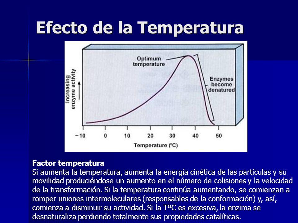 Efecto de la Temperatura Factor temperatura Si aumenta la temperatura, aumenta la energía cinética de las partículas y su movilidad produciéndose un a