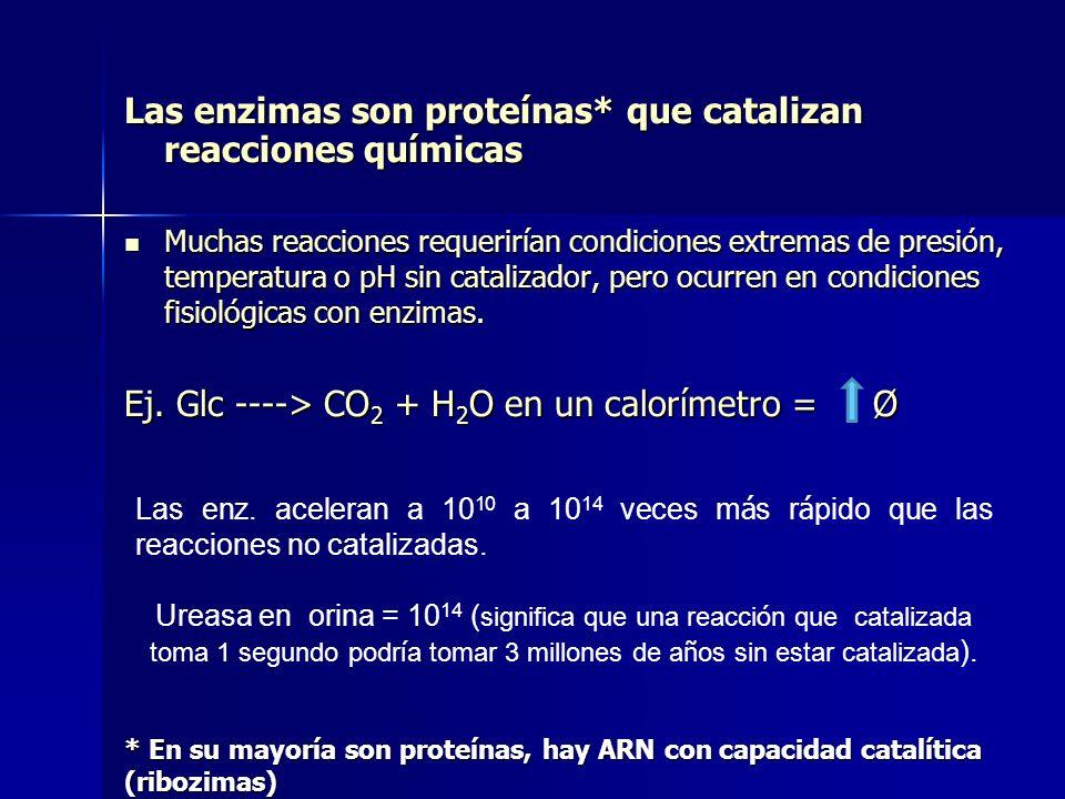 Las enzimas son proteínas* que catalizan reacciones químicas Muchas reacciones requerirían condiciones extremas de presión, temperatura o pH sin catal