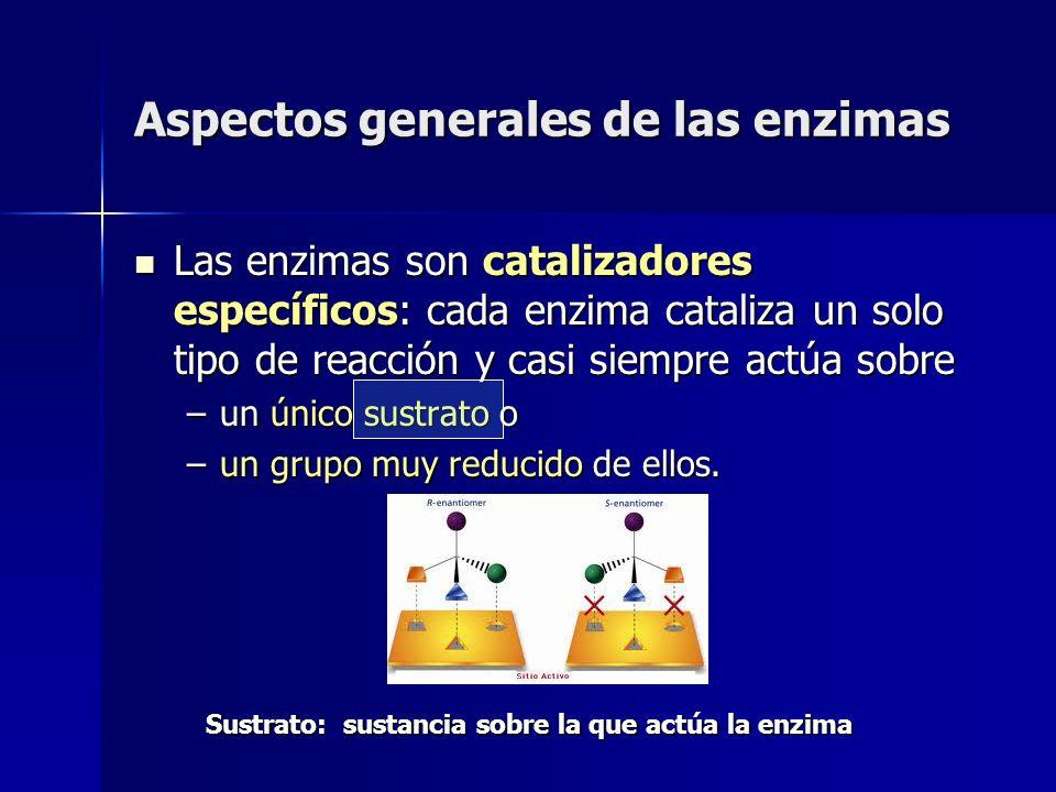 Aspectos generales de las enzimas Las enzimas son catalizadores específicos: cada enzima cataliza un solo tipo de reacción y casi siempre actúa sobre
