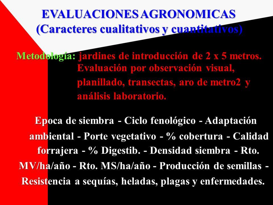 EVALUACIONES AGRONOMICAS (Caracteres cualitativos y cuantitativos) (Caracteres cualitativos y cuantitativos) Metodología: jardines de introducción de