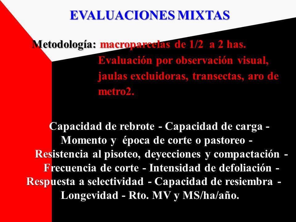 EVALUACIONES MIXTAS Metodología: macroparcelas de 1/2 a 2 has. Metodología: macroparcelas de 1/2 a 2 has. Evaluación por observación visual, Evaluació