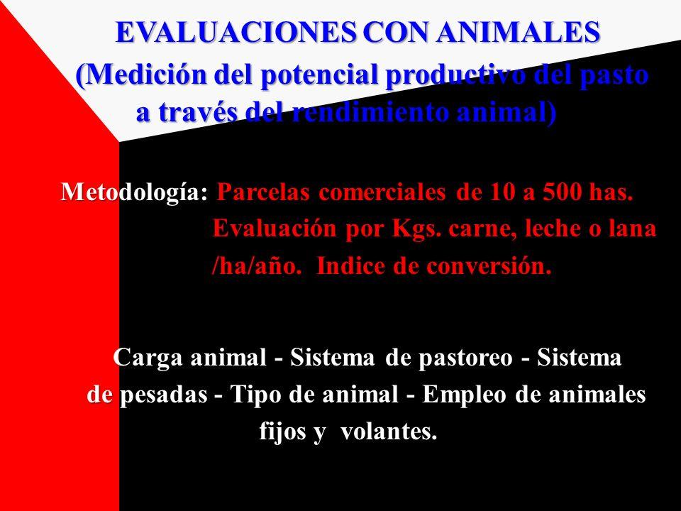EVALUACIONES CON ANIMALES (Medición del potencial productivo del pasto (Medición del potencial productivo del pasto a través del rendimiento animal) a
