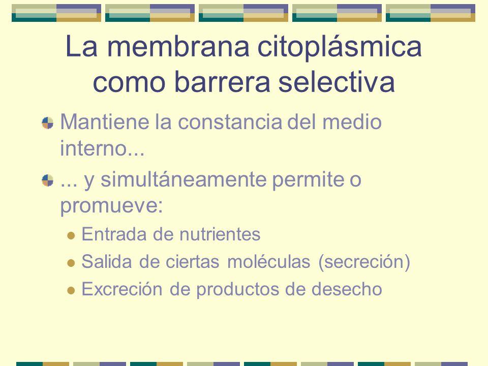 La membrana citoplásmica como barrera selectiva Mantiene la constancia del medio interno...... y simultáneamente permite o promueve: Entrada de nutrie