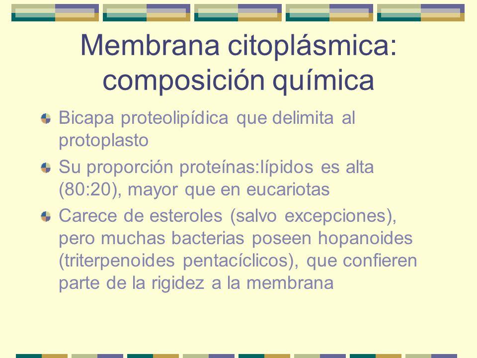 Membrana citoplásmica: composición química Bicapa proteolipídica que delimita al protoplasto Su proporción proteínas:lípidos es alta (80:20), mayor qu