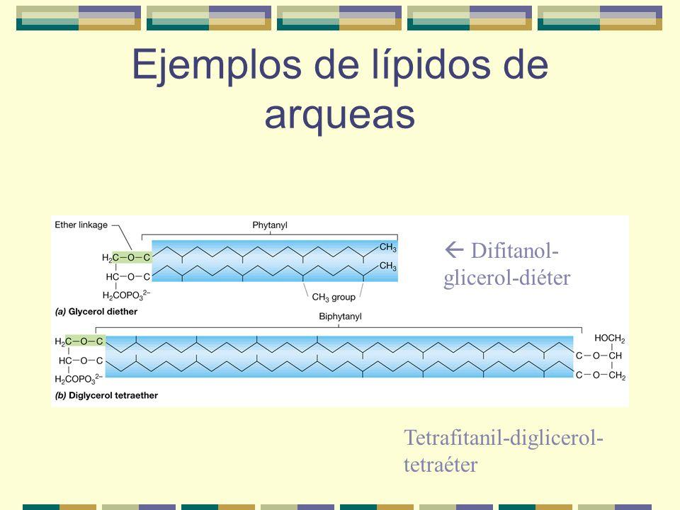 Ejemplos de lípidos de arqueas Difitanol- glicerol-diéter Tetrafitanil-diglicerol- tetraéter
