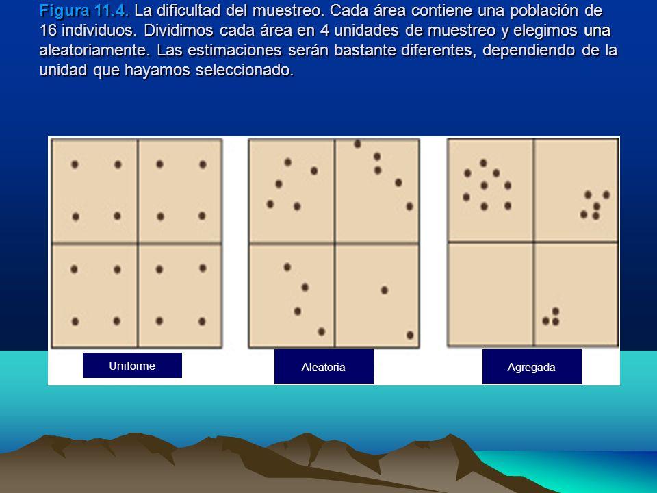 Figura 11.4. La dificultad del muestreo. Cada área contiene una población de 16 individuos. Dividimos cada área en 4 unidades de muestreo y elegimos u