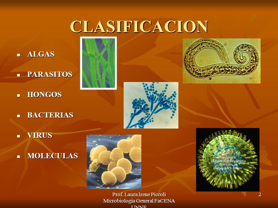 Prof. Laura Irene Piccoli Microbiología General FaCENA UNNE 2 CLASIFICACION ALGAS ALGAS PARASITOS PARASITOS HONGOS HONGOS BACTERIAS BACTERIAS VIRUS VI