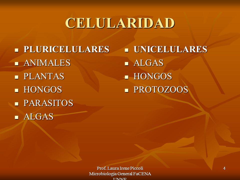 Prof. Laura Irene Piccoli Microbiología General FaCENA UNNE 4 CELULARIDAD PLURICELULARES PLURICELULARES ANIMALES ANIMALES PLANTAS PLANTAS HONGOS HONGO